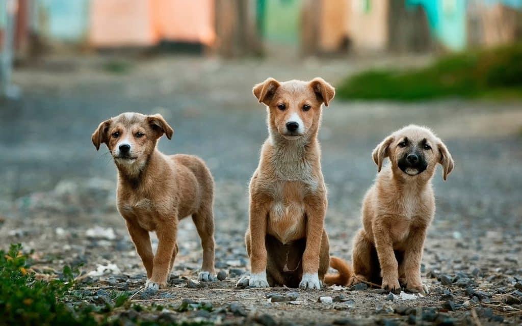 3 welpenhunde