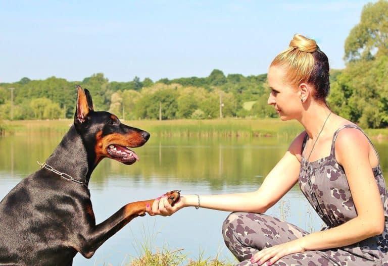 hunde menschen freundschaft