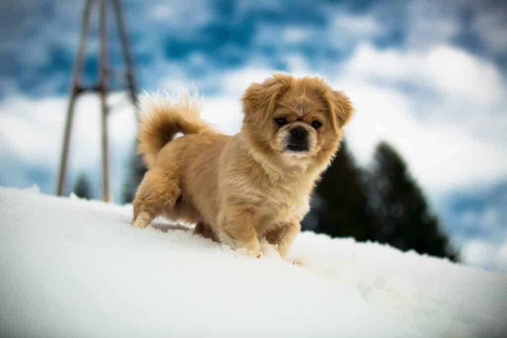 hunde welpe im schnee