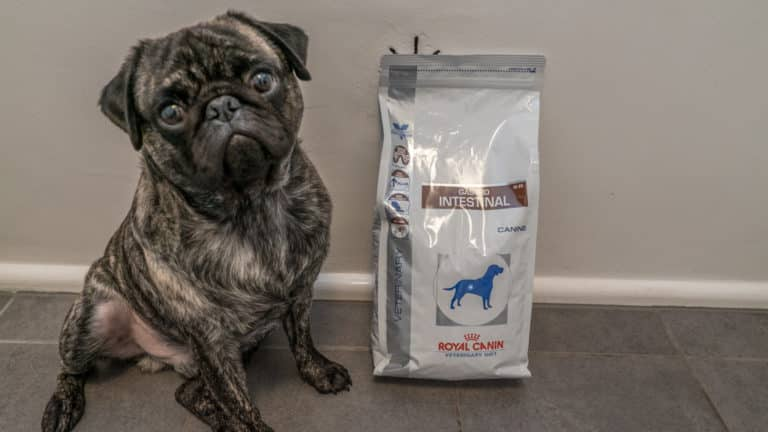 royal canin hundefutter test