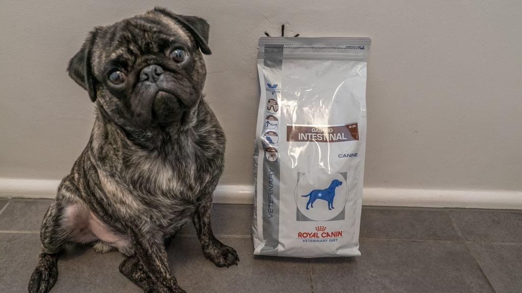 royal canin hundefutter test