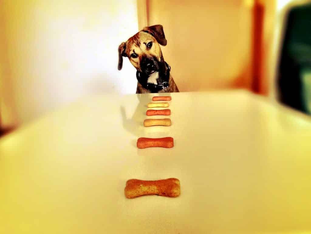hund frisst leckerlis