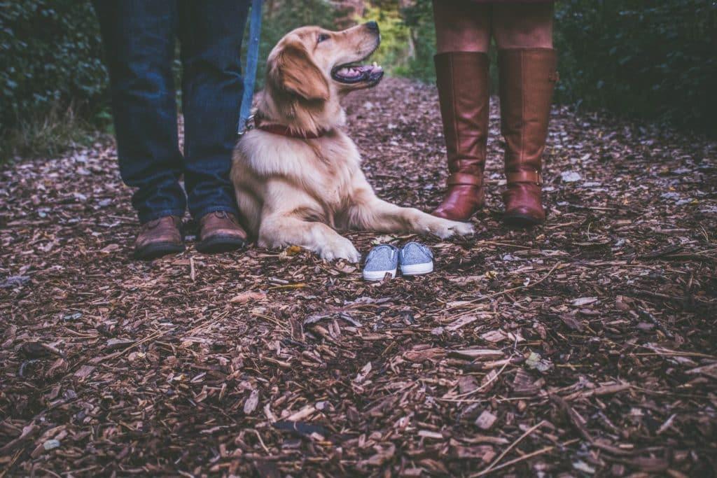 hund mit besitzern
