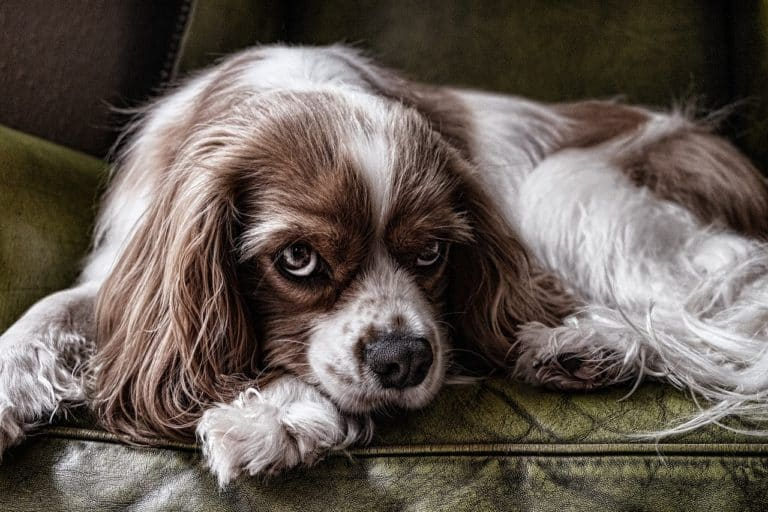 nierenkranker hund
