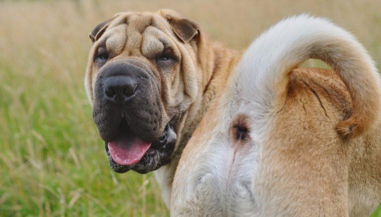 bauchgrummeln hund