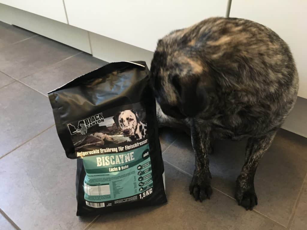 black canyon hundefutter
