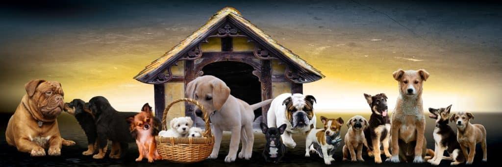 5 Fakten zu: Wie alt werden Hunde? 1