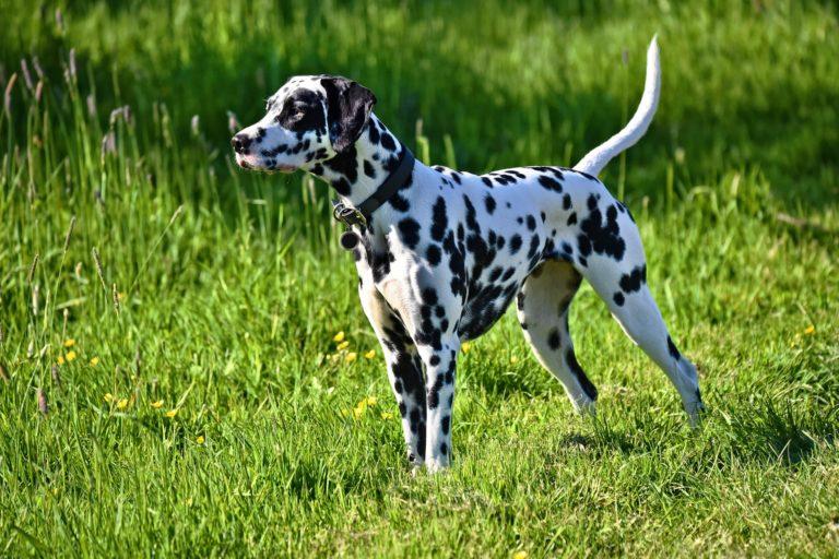 Kreuzbandriss beim Hund (Symptome, Ursachen, Tipps ) | HUNDEO