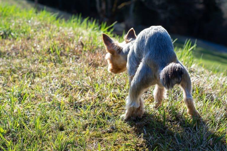 5 Tipps, wie du Darmverschluss beim Hund erkennst und richtig behandelst 4