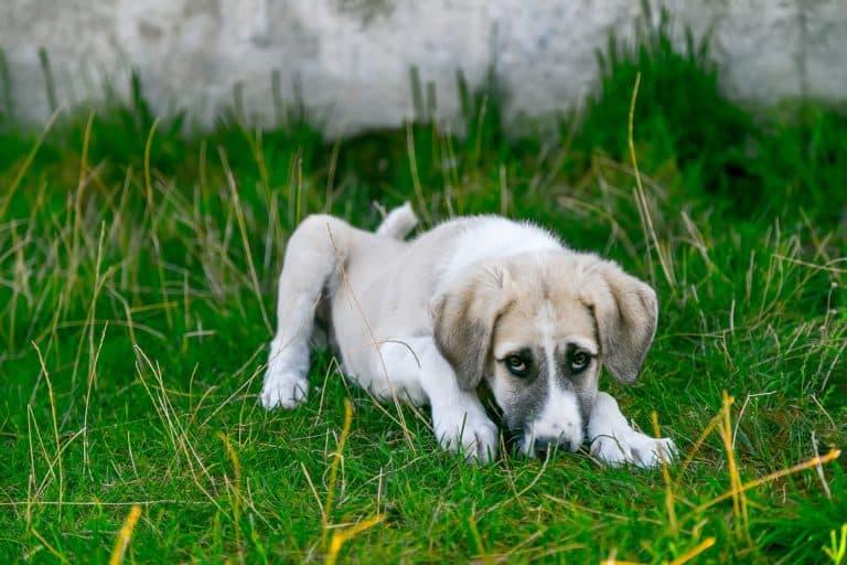 Hund erbricht? (Was tun wenn er sich übergibt?) 2