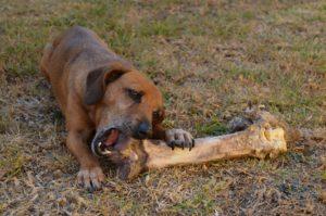 Hund Knochen