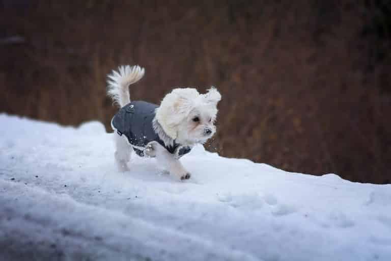 hund winter kälte