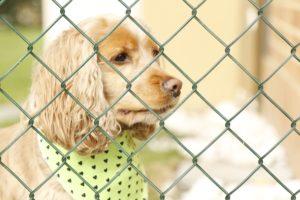 Hund Absperrgitter