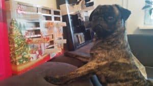 hund mit adventskalender