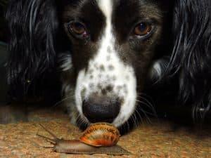 Hund Schnecke Schneckenkorn