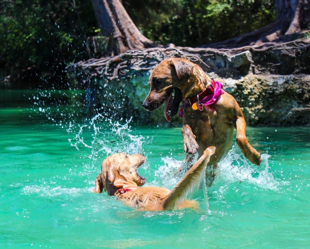 Hundeschwimmweste Test (Die 5 besten im Vergleich) 3