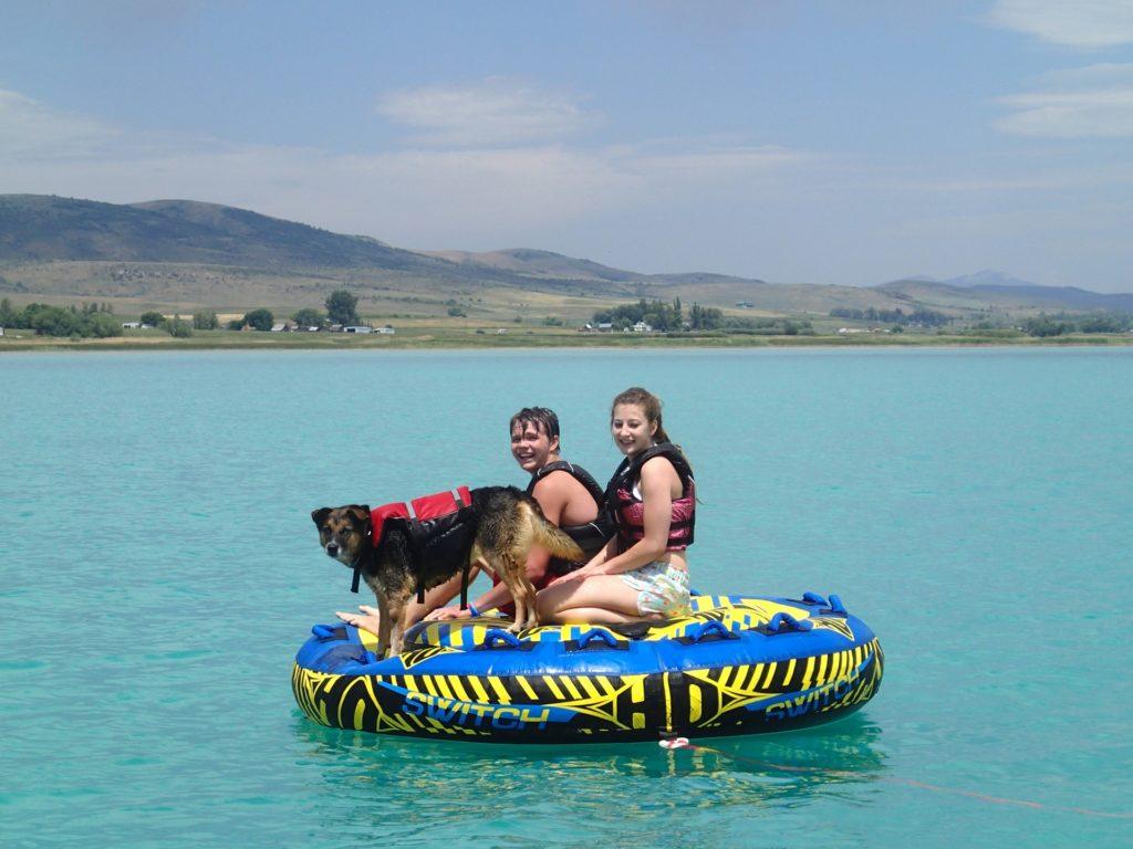 Hund Schwimmweste Boot