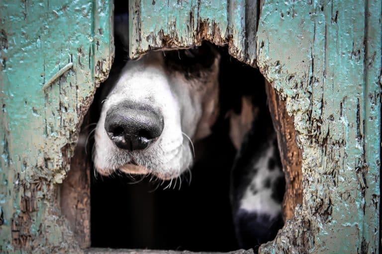 hundeabsperrgitter