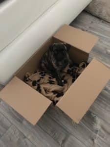 hundebox karton