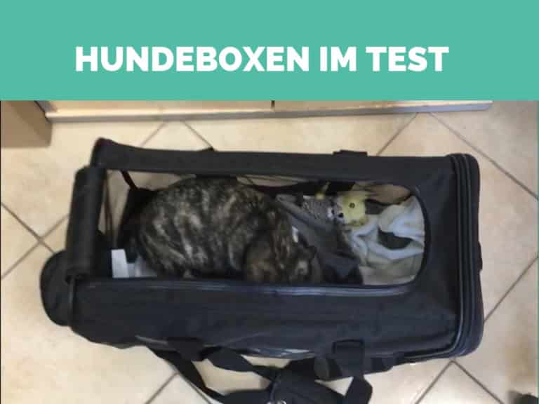 hundebox text
