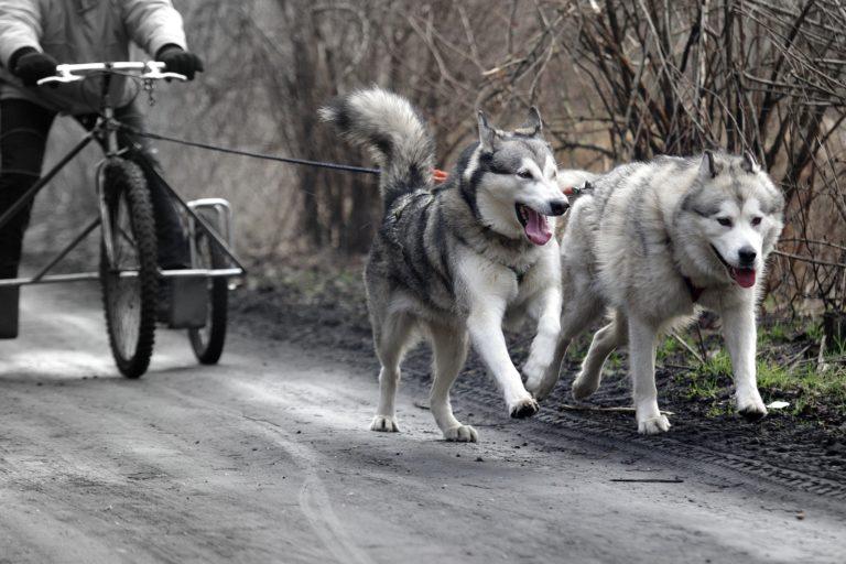 Husky Dogscooter