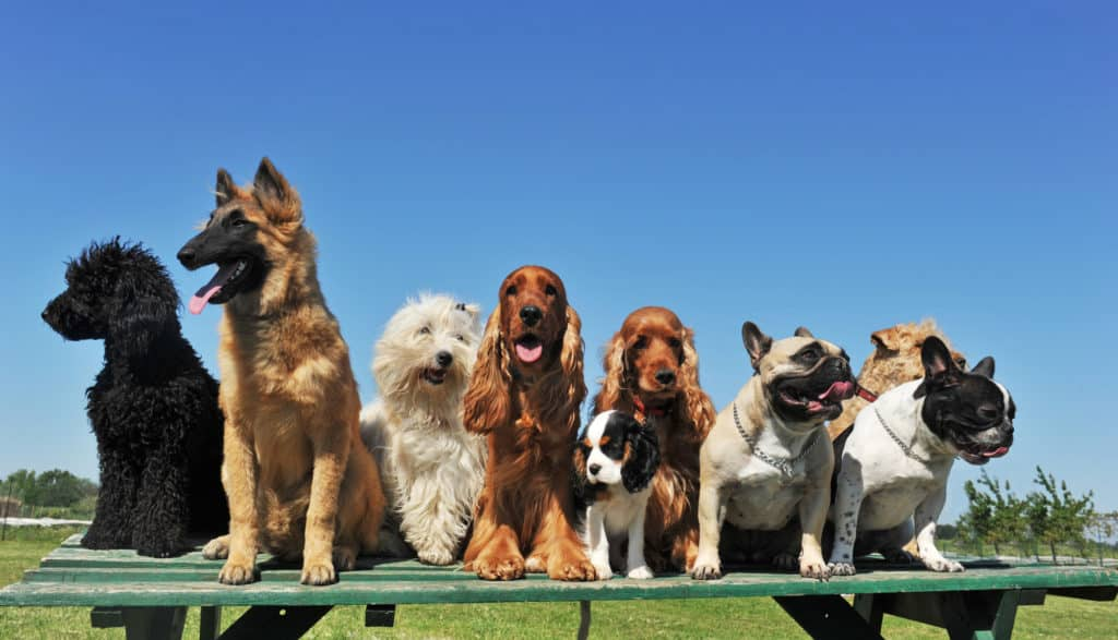 Hundeo Gruppe