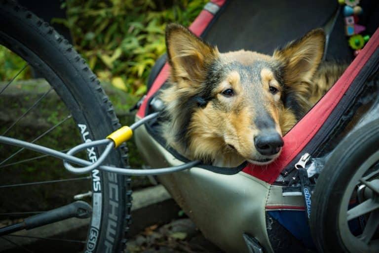 Hundebuggy Test (Das sind die 5 besten Marken) 1