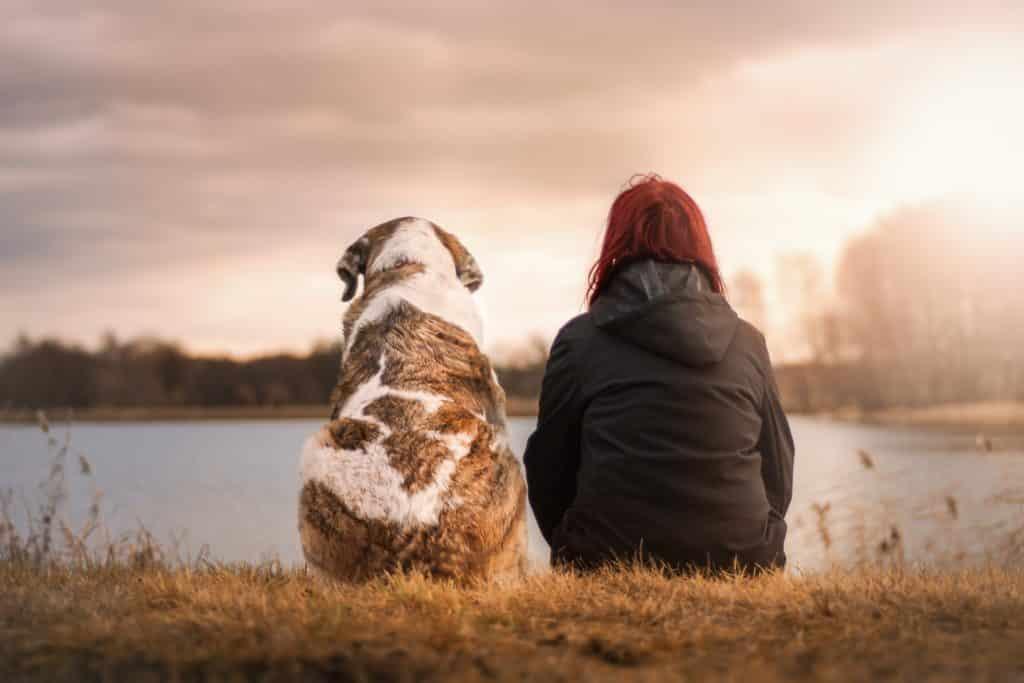 Hund Freund Natur