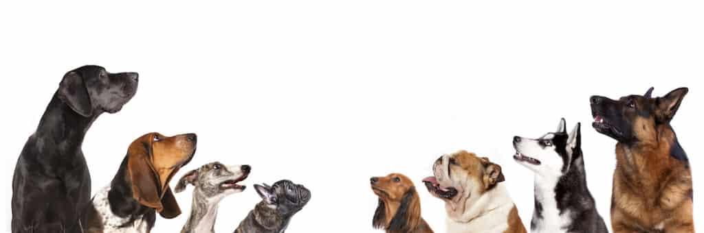 265 Hunderassen im großen Hundelexikon