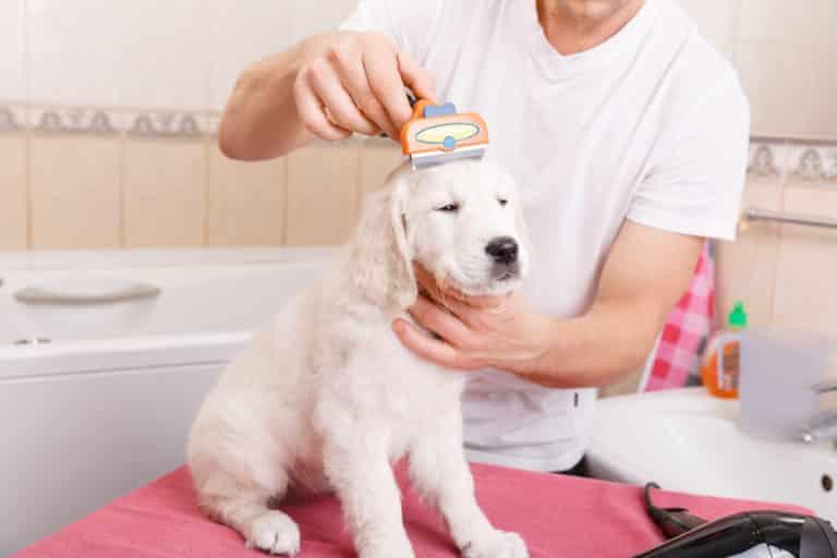 Hundepflege mit Kamm