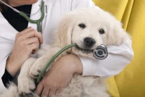 IBD Hund