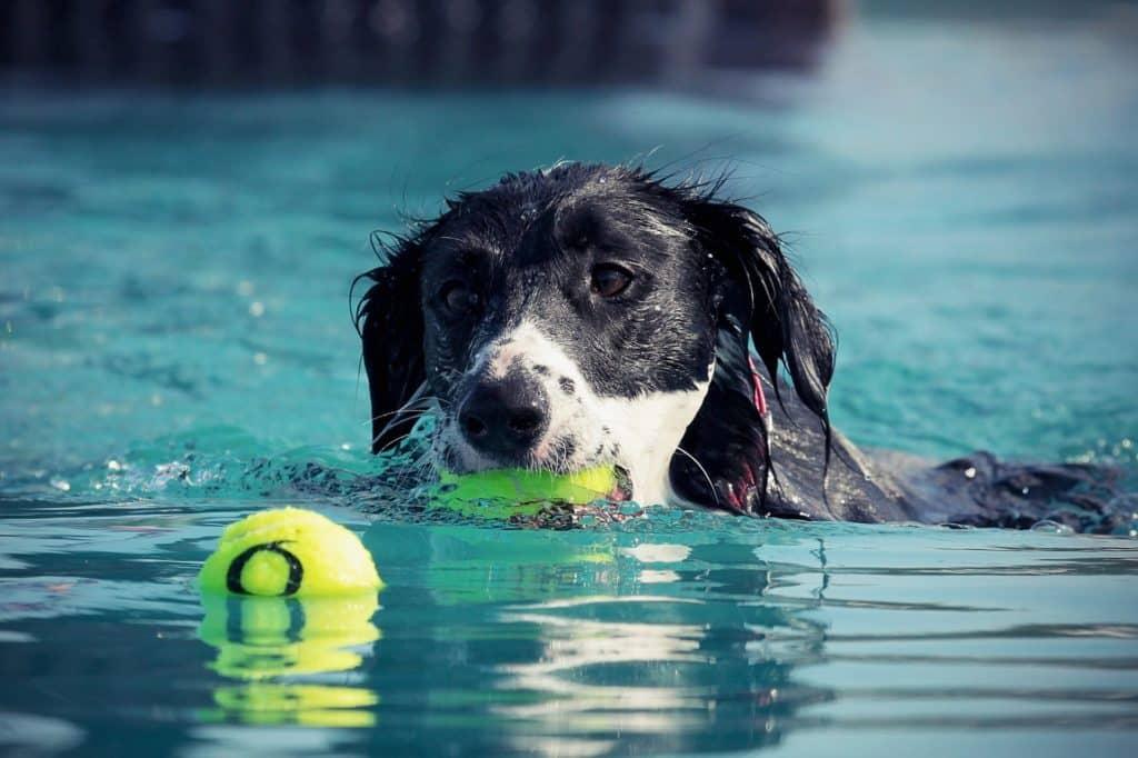 schwimmen pool