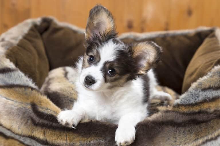 Hundebett Welpe