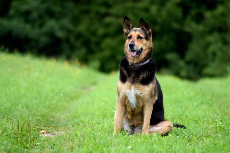 Impulskontrolle beim Hund (4 wichtige Regeln) 1