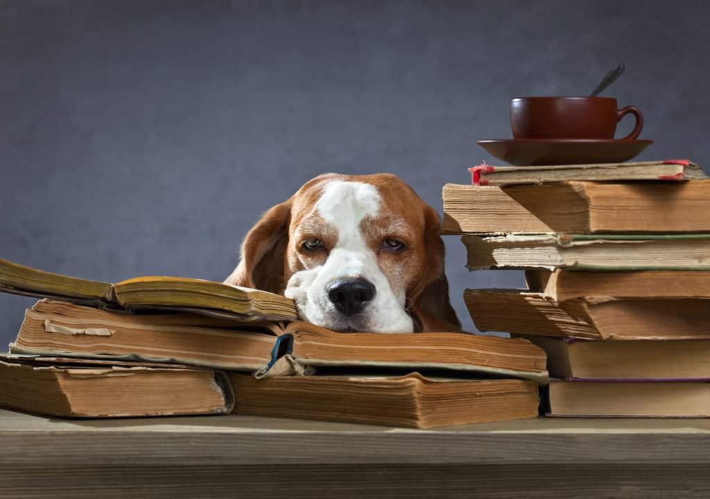 Hund schläft auf Büchern