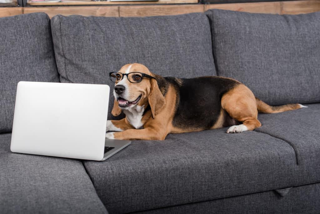 Hunde Information