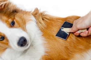 Hundebürste Test