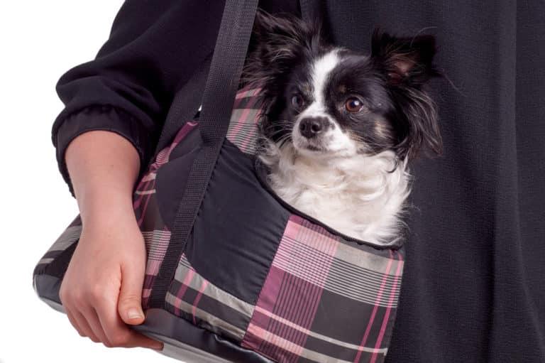 Hundebox faltbar Tasche