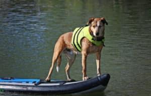 Hundeschwimmweste Test