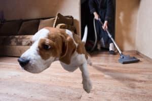 staubsauger hund
