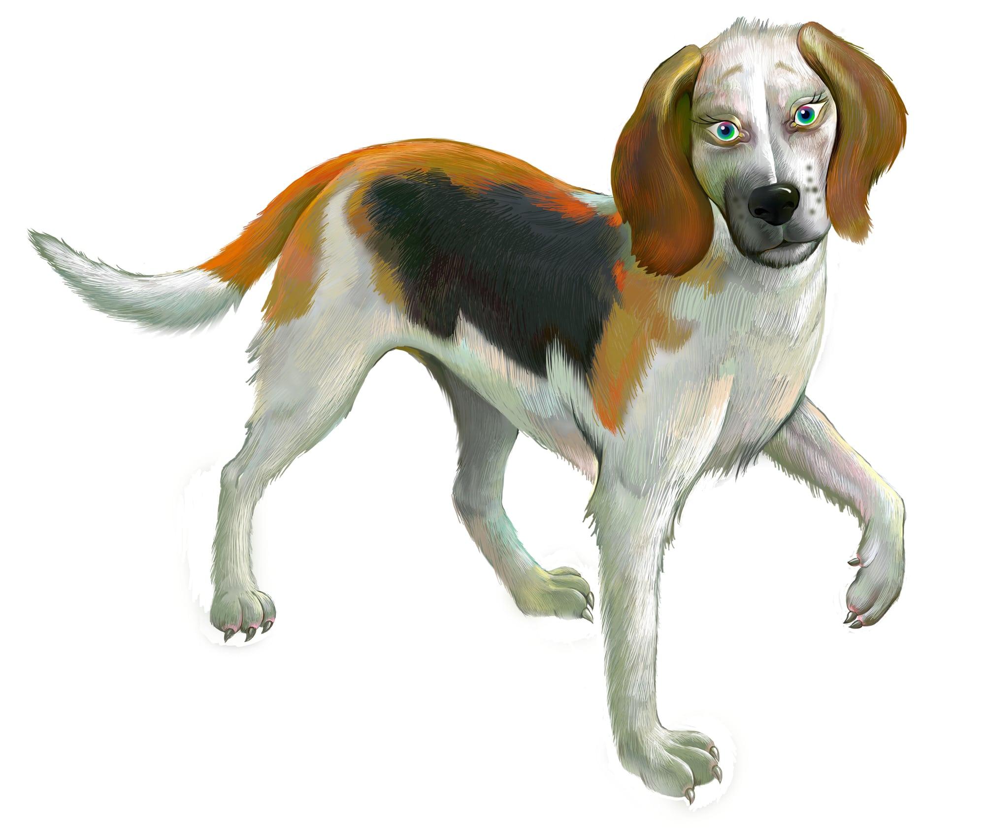 American Foxhound Geschichte
