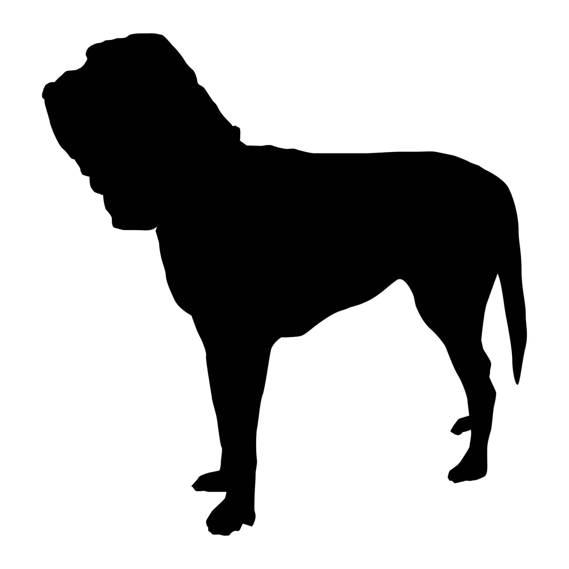 bloodhound_herkunft