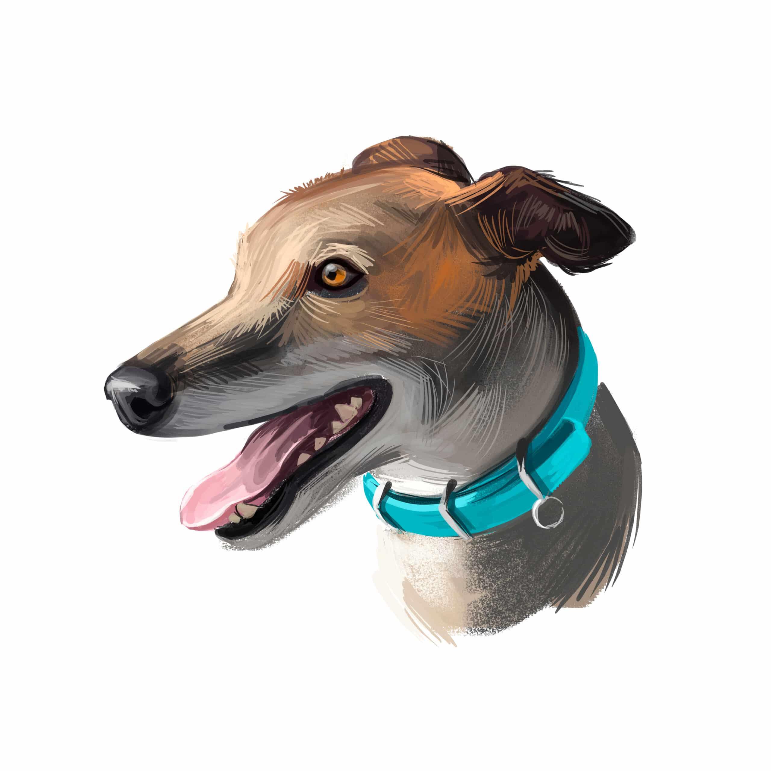 Greyhound Geschichte