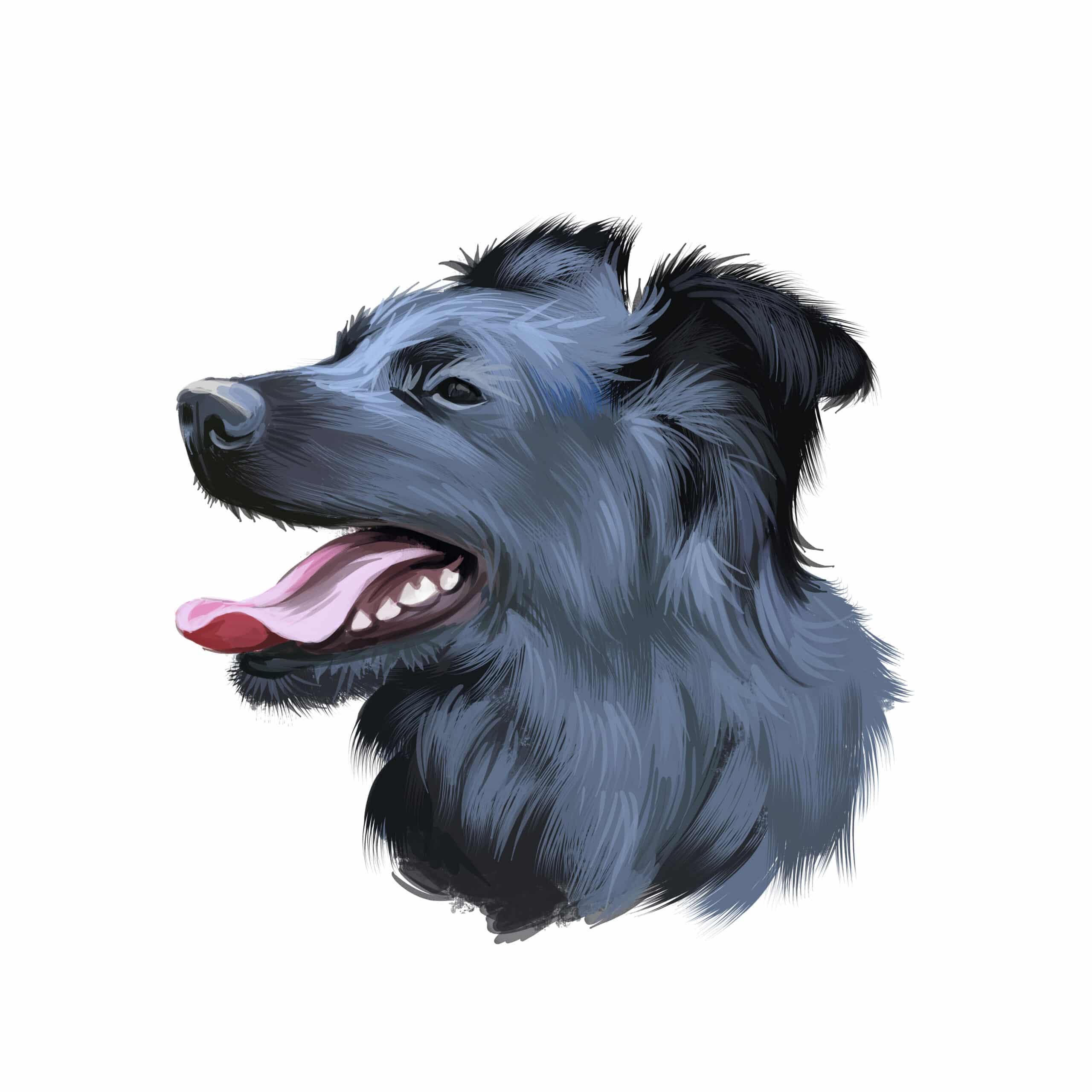 Kroatischer Schäferhund Geschichte