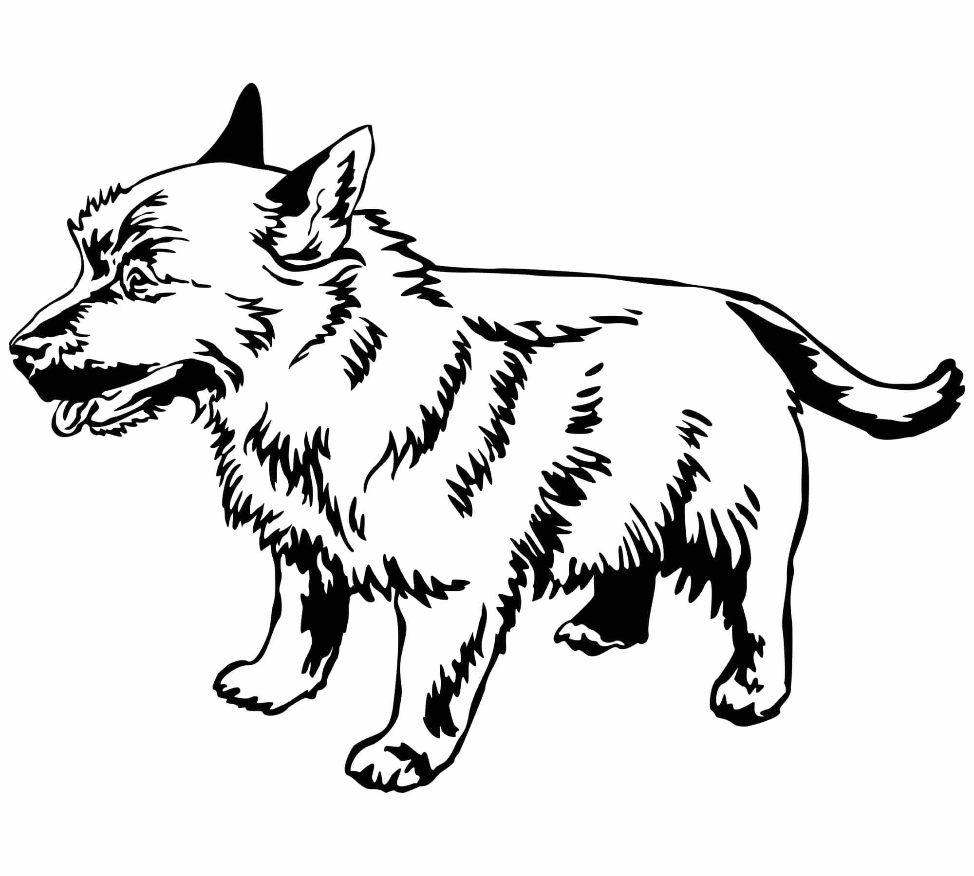 Norwich-Terrier-Herkunft