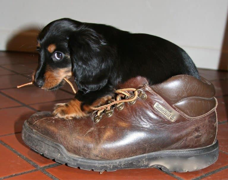 puppy 1577613 1920