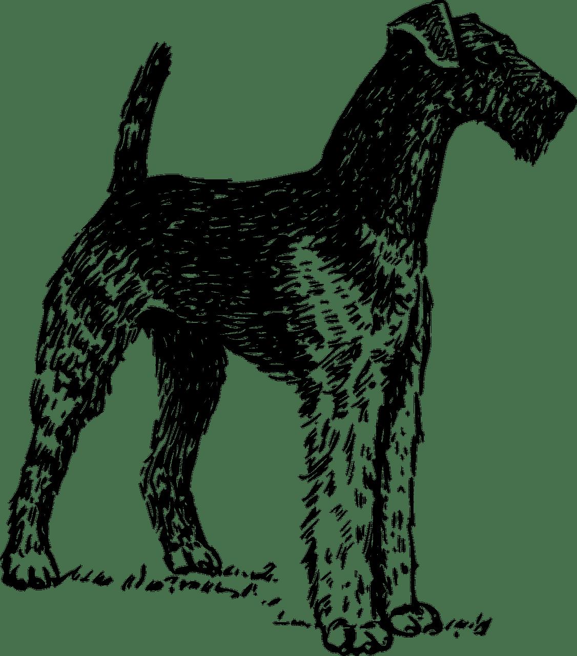 Airedale Terrier Geschichte
