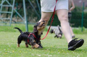 Hundeschule Kosten