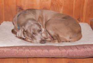 orthopädisches hundebett