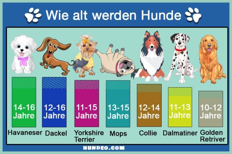 Grafik Wie alt werden Hunde